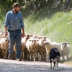 Eperheide lamsvlees