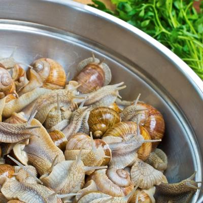 Escargots: niet één pot nat