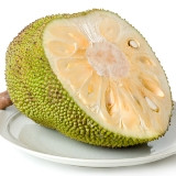 Nangka of Jackfruit